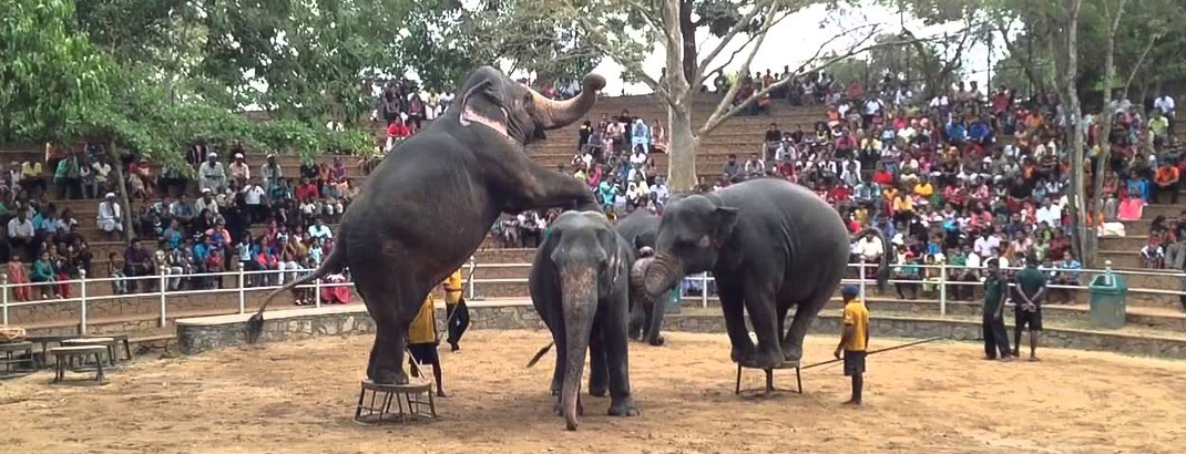 Elephant Circus at Dehiwala Zoo
